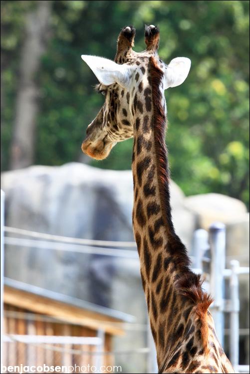 IMAGE: http://www.benjacobsen.com/wp-content/gallery/zoo-zoo/img_1685.jpg