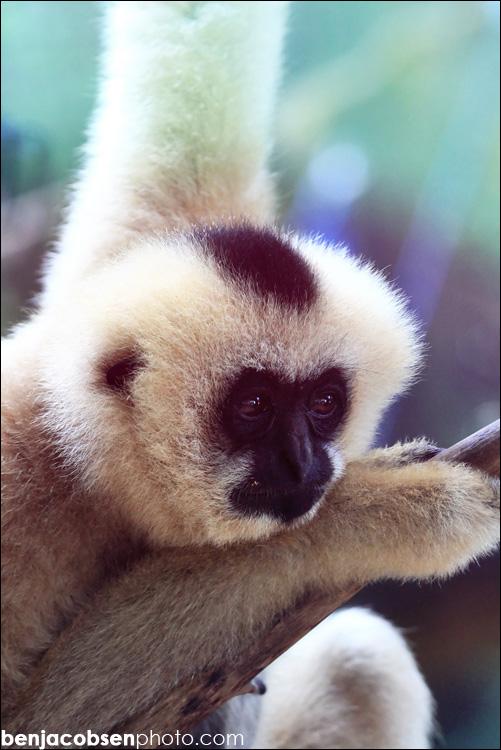 IMAGE: http://www.benjacobsen.com/wp-content/gallery/zoo-zoo/img_1724.jpg
