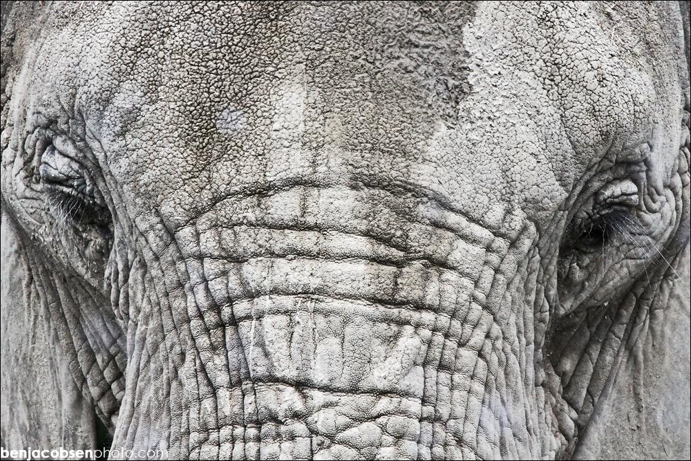 IMAGE: http://www.benjacobsen.com/wp-content/gallery/zoo-zoo/img_1775.jpg
