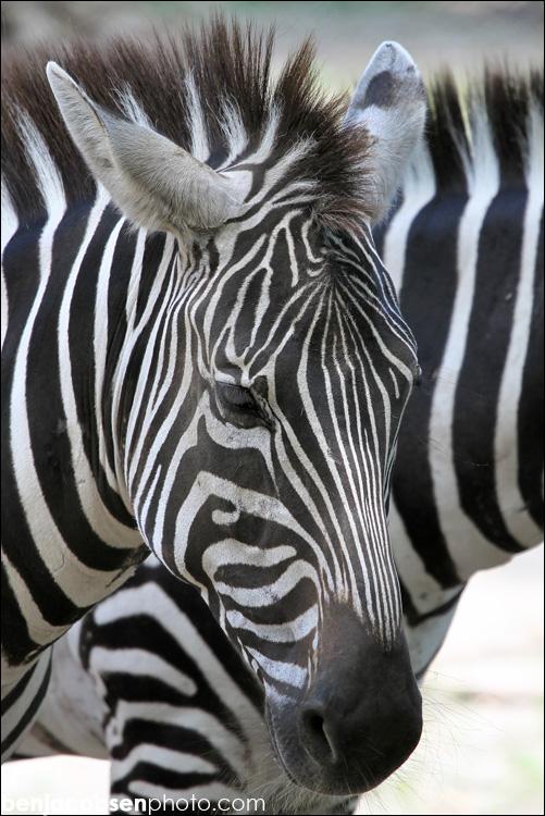 IMAGE: http://www.benjacobsen.com/wp-content/gallery/zoo-zoo/img_1789.jpg